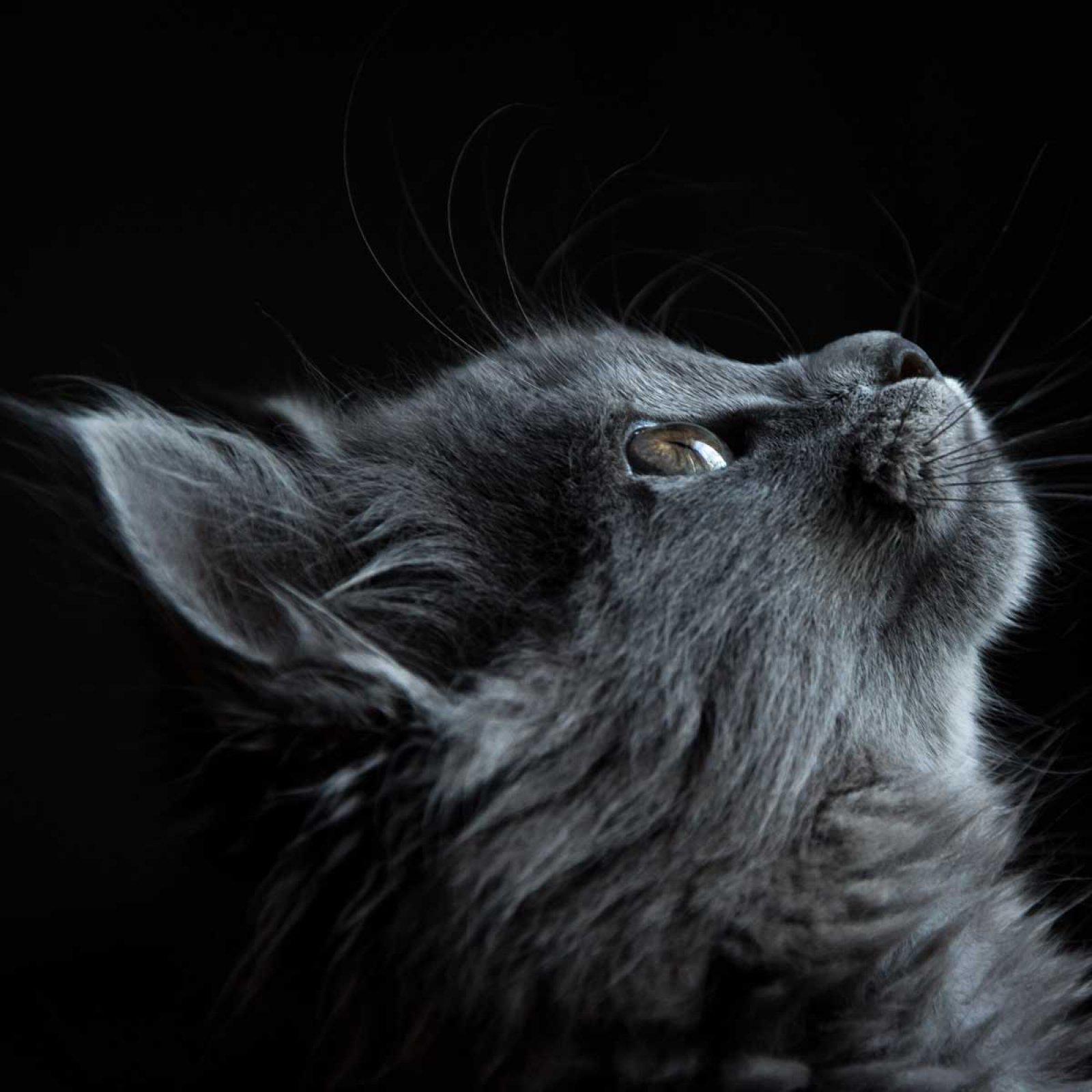 #1 Waarom katten yogi's zijn